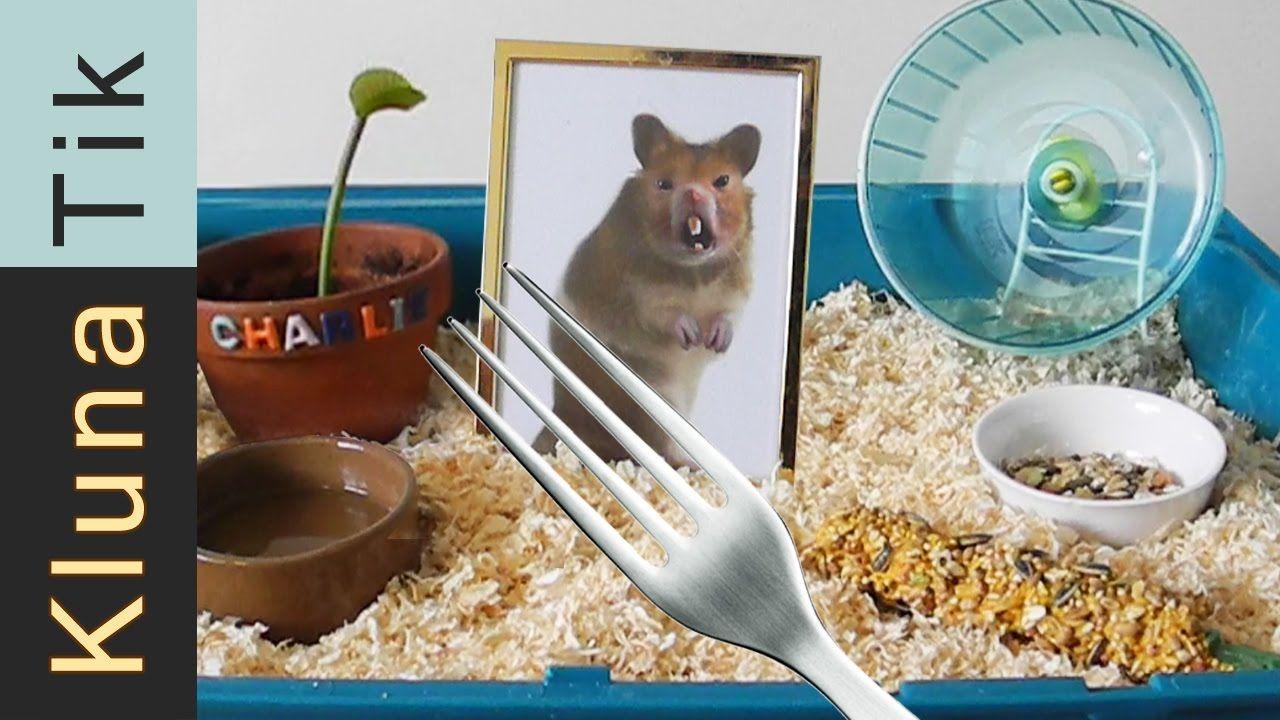 Kluna got a HAMSTER for ANIMAL DAY!!! Kluna Tik Dinner 35
