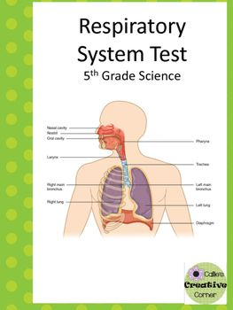 Respiratory system test respiratory system teacher pay teachers respiratory system test can also be used as a quiz all questions are ccuart Choice Image