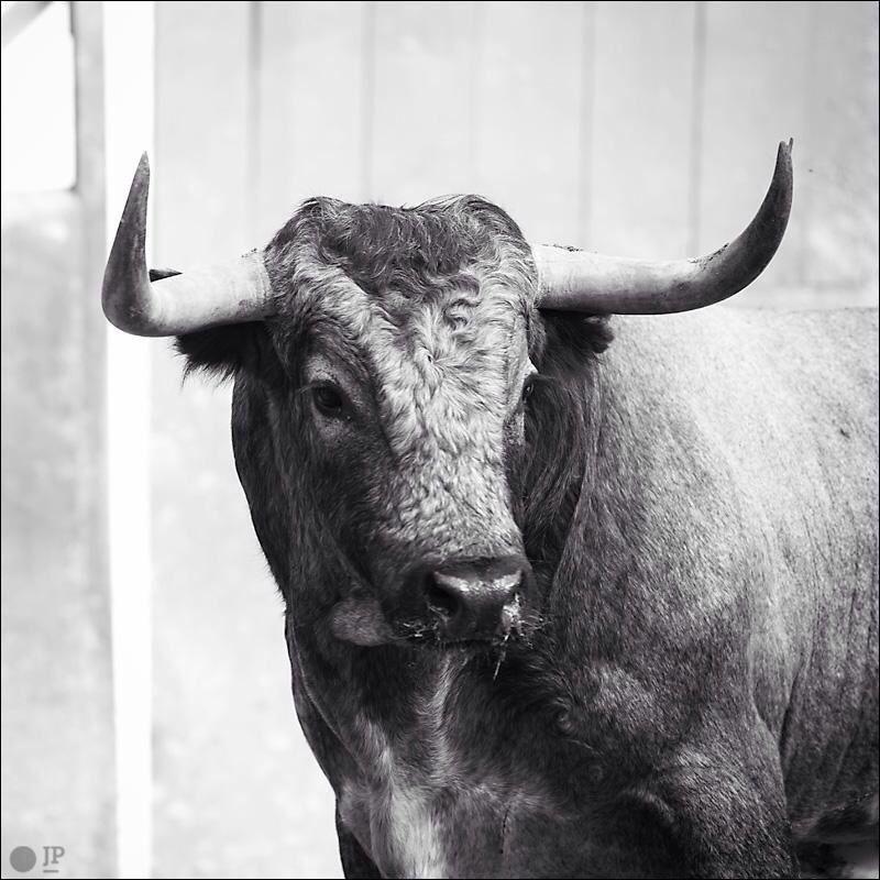 Partido De Resina Bull Painting Animal Skeletons Cattle Ranching
