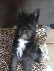 Adopt Zenzi On Schnauzer Dogs City Pets Dogs
