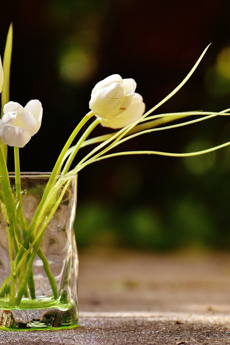 New free photo from Pexels: https://www.pexels.com/photo/clear-glass-hugo-bottle-with-white-flowers-207196/ #flowers #glass #petals