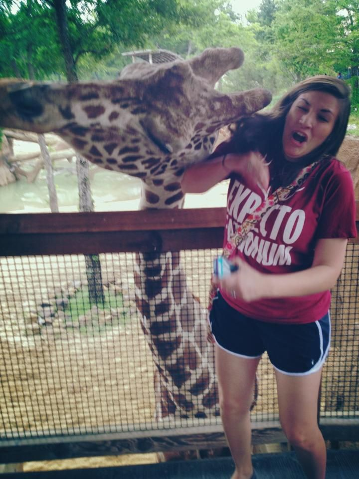 Hahahaha, headbutted by a giraffe. They are so awkward and amazing.