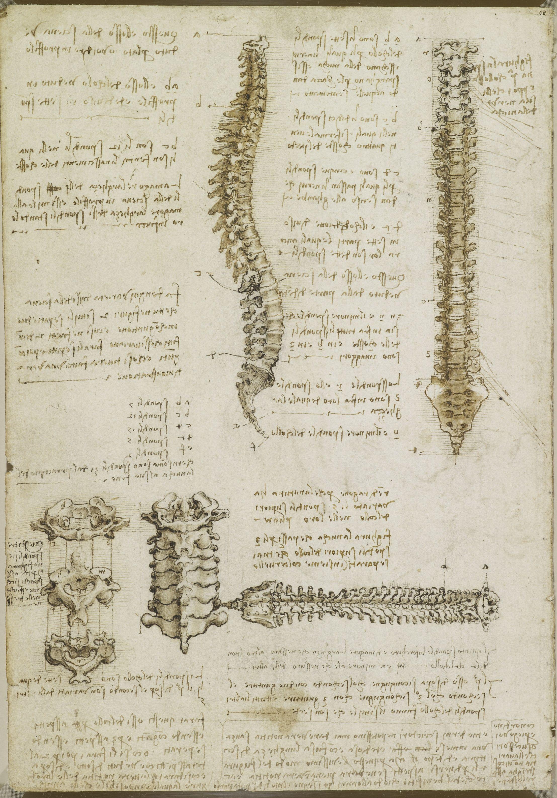 spina dorsale, Leonardo | leonardo da vinci | Pinterest