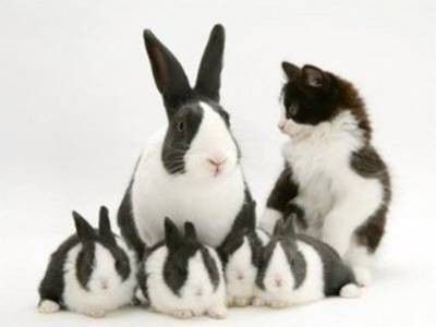 Look at these bunny and cat look alike pictures. It's fascinating how similar they look, yet they are two different species :). They look like they can be best buddies. Which duo do you think resemble each other the most?  Scroll down to see more pictures.