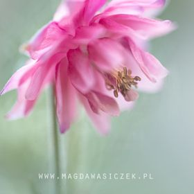 Magda Wasiczek / Collection_collection_fotopastele_flowers