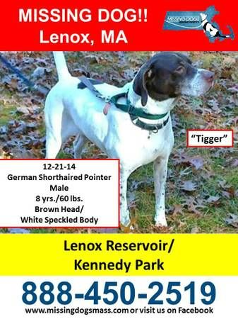 Missing Male German Shorthaired Pointer
