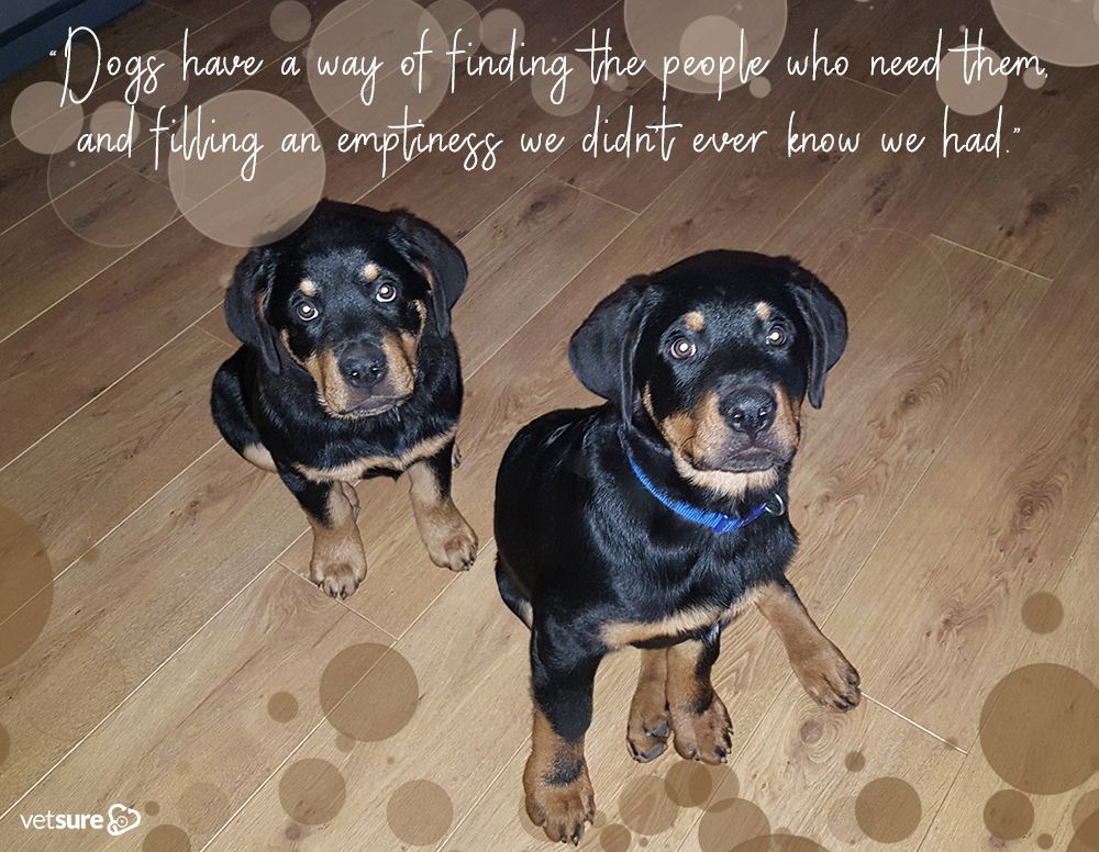 Lucy And Levi Sharing Our Tuesdaythought This Week Rottweiler