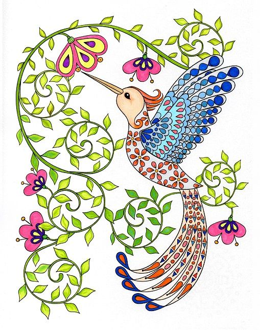 Hummingbird Colouring Page For Adult