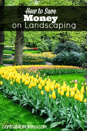How to Save Money on Landscaping #landscapingtips