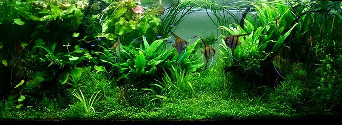 7 Aquascaping Styles For Aquariums The Aquarium Guide Aquascape Nature Aquarium Planted Aquarium