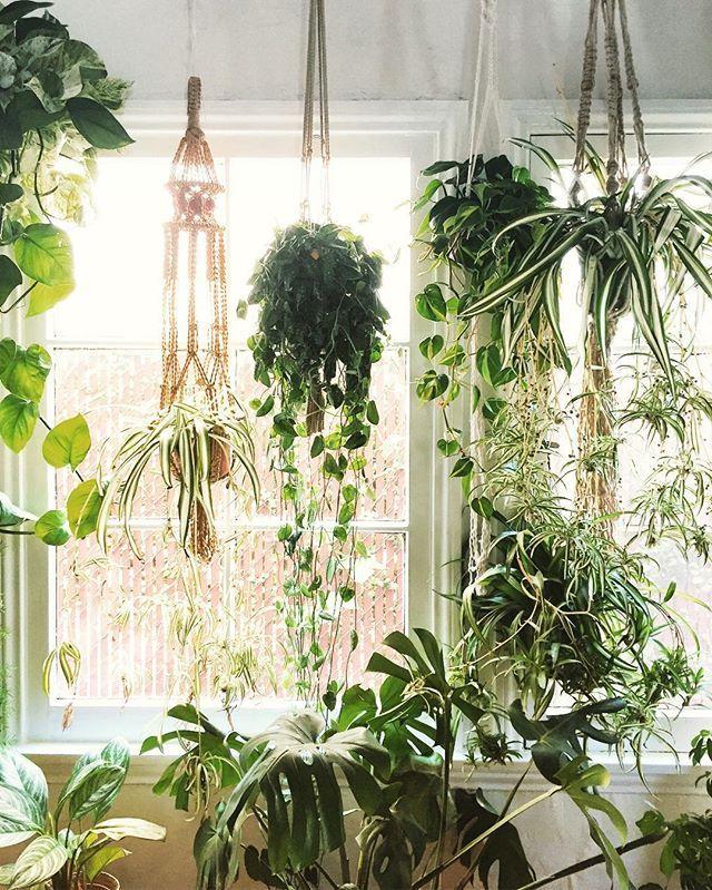 f r meine wohnung wohl die einzige l sung pflanzen von der decke h ngen lassen gr nes. Black Bedroom Furniture Sets. Home Design Ideas