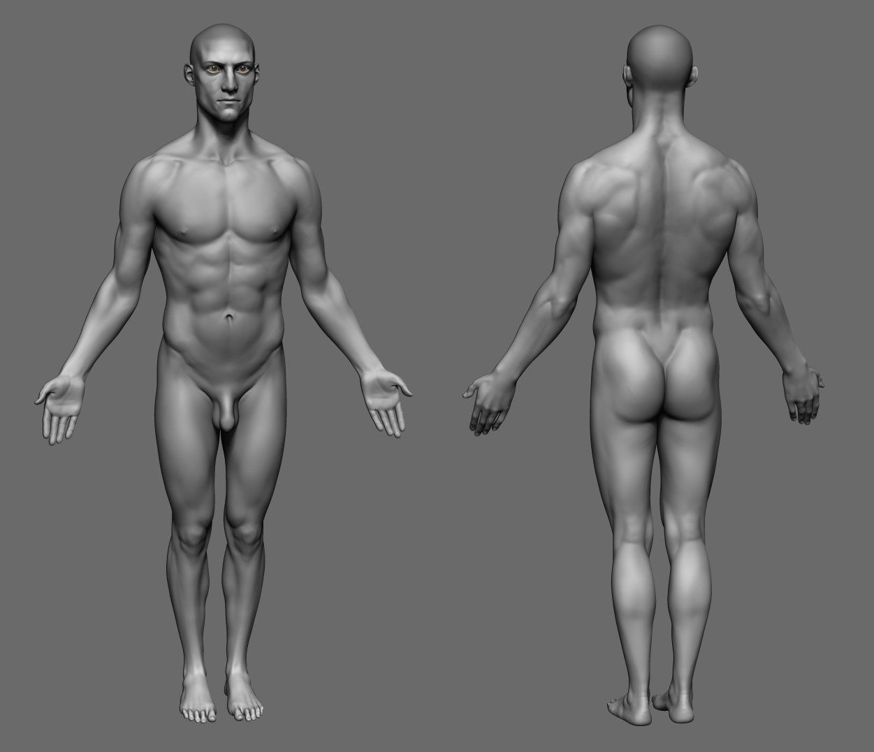Male Anatomy Study, Iris Yurtsev on ArtStation at https://www ...