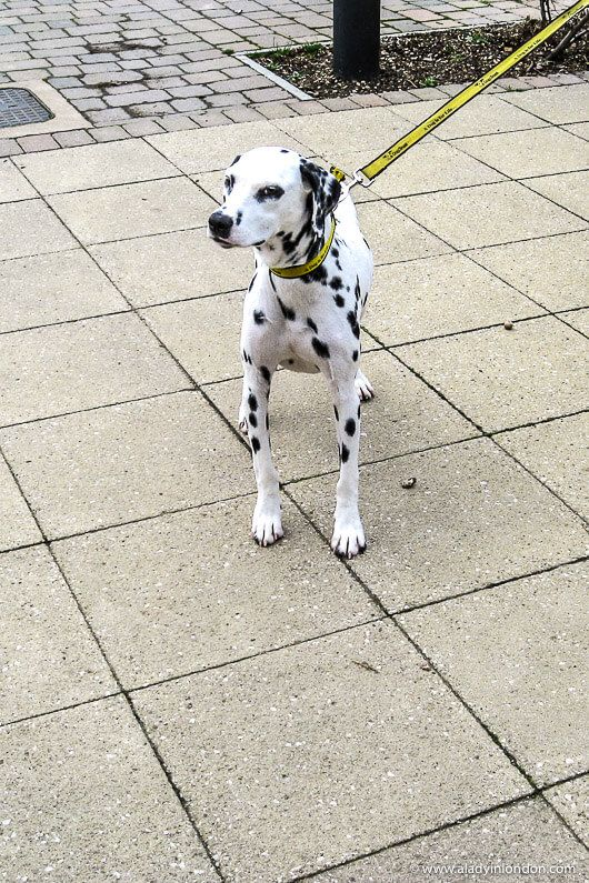 Visiting Dogs Trust In London A Guide To Visiting The Dogs In 2020 Dogs Trust Dogs Dalmatian Dogs