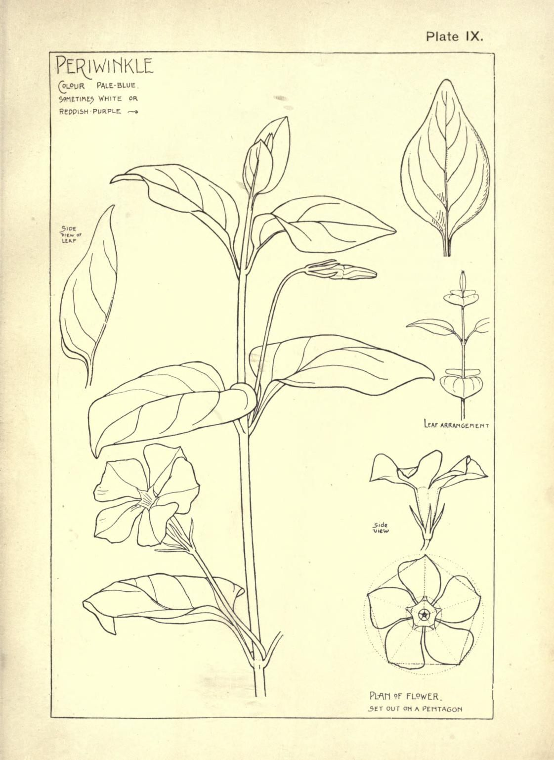 Nature drawing and design Steeley, Frank Free Download