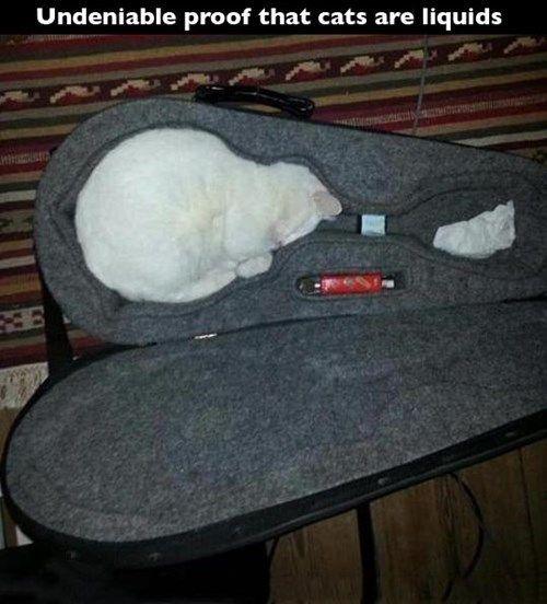 Cats Are Liquids