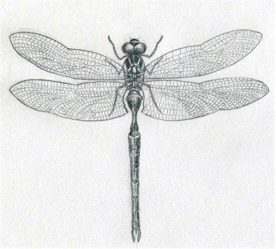 dragonfly simple | Body art | Pinterest | Libélulas, Laminas cuadros ...