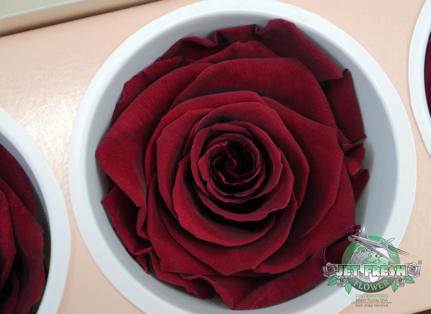 Burgundy Preserved Roses Are One Of Our Favorite New Wine Colored Varieties Available Now At