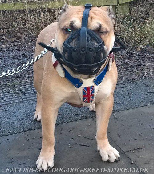 Leather Mesh Muzzle For Old Tyme Bulldog Oldenglishbulldog Bully