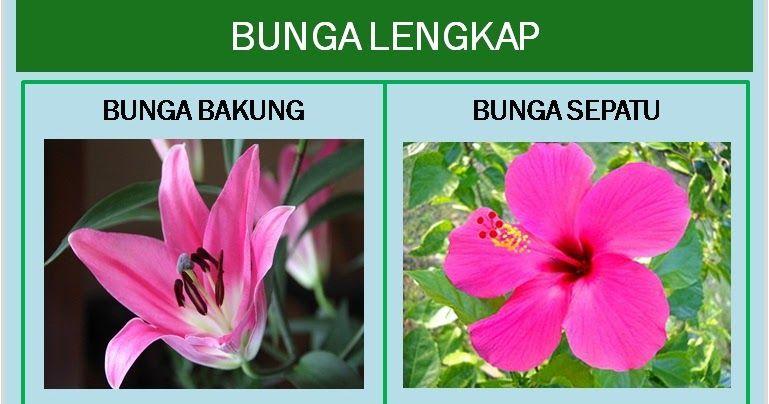 Gambar Animasi Bunga Sepatu Bunga Lengkap Dan Bunga Tidak Lengkap Bimbel Brilian Heri Triyanto Heritriyanto72 On Pinterest 3458 Di 2020 Bunga Kembang Sepatu Gambar