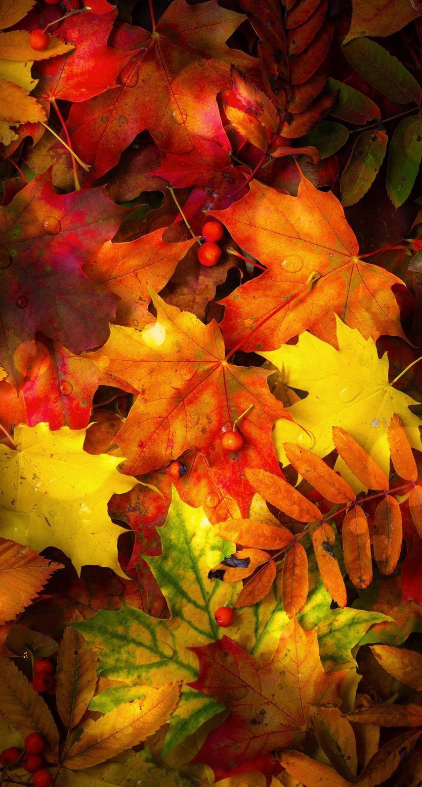 Pin By Lisa Degarmo On Cell Phone Background Wallpaper Lock Screen Autumn Leaves Wallpaper Painting Fall Leaves Autumn Wallpaper