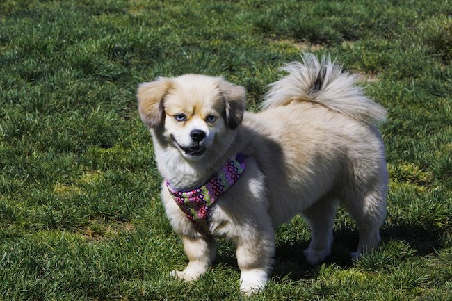 Doggonit Obedience Is Pasadena California Based Dog Training
