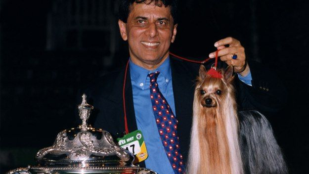 Crufts Best In Show 1997 Ozmilion Mystification Yorkshire