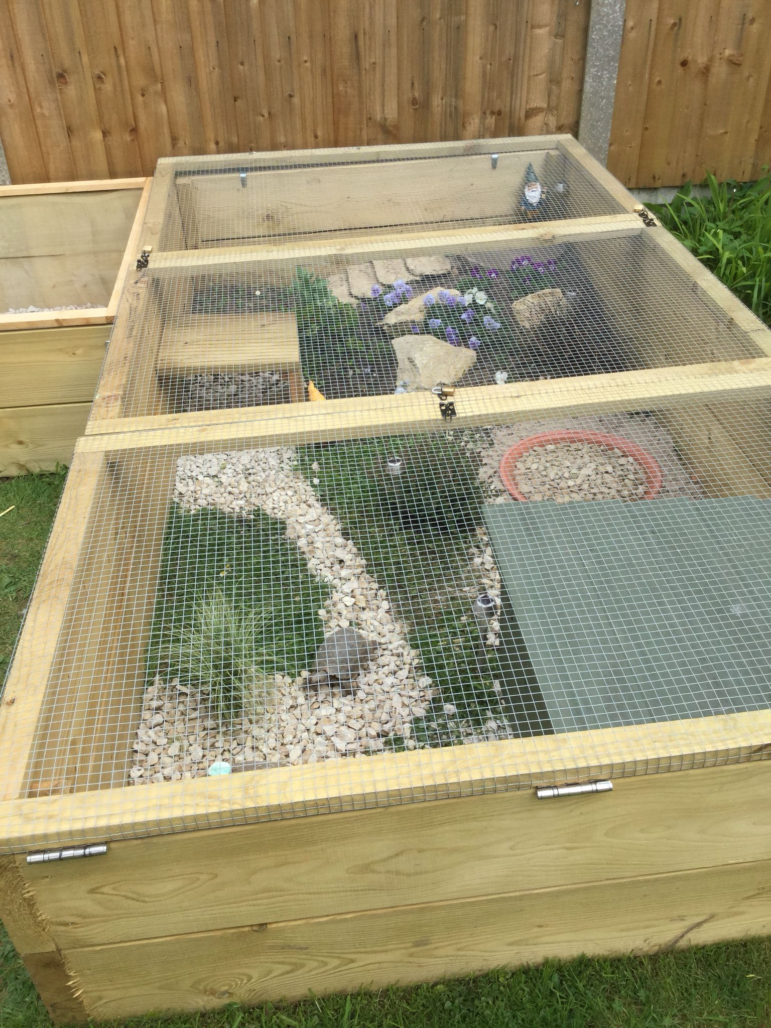 Tortoise Town Safe From Dogs And Birds Enclos Tortue Terrarium