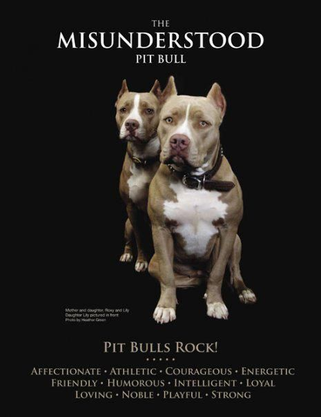 Pit Bulls Dogs Are Only A Reflection Of Their Owner And Their