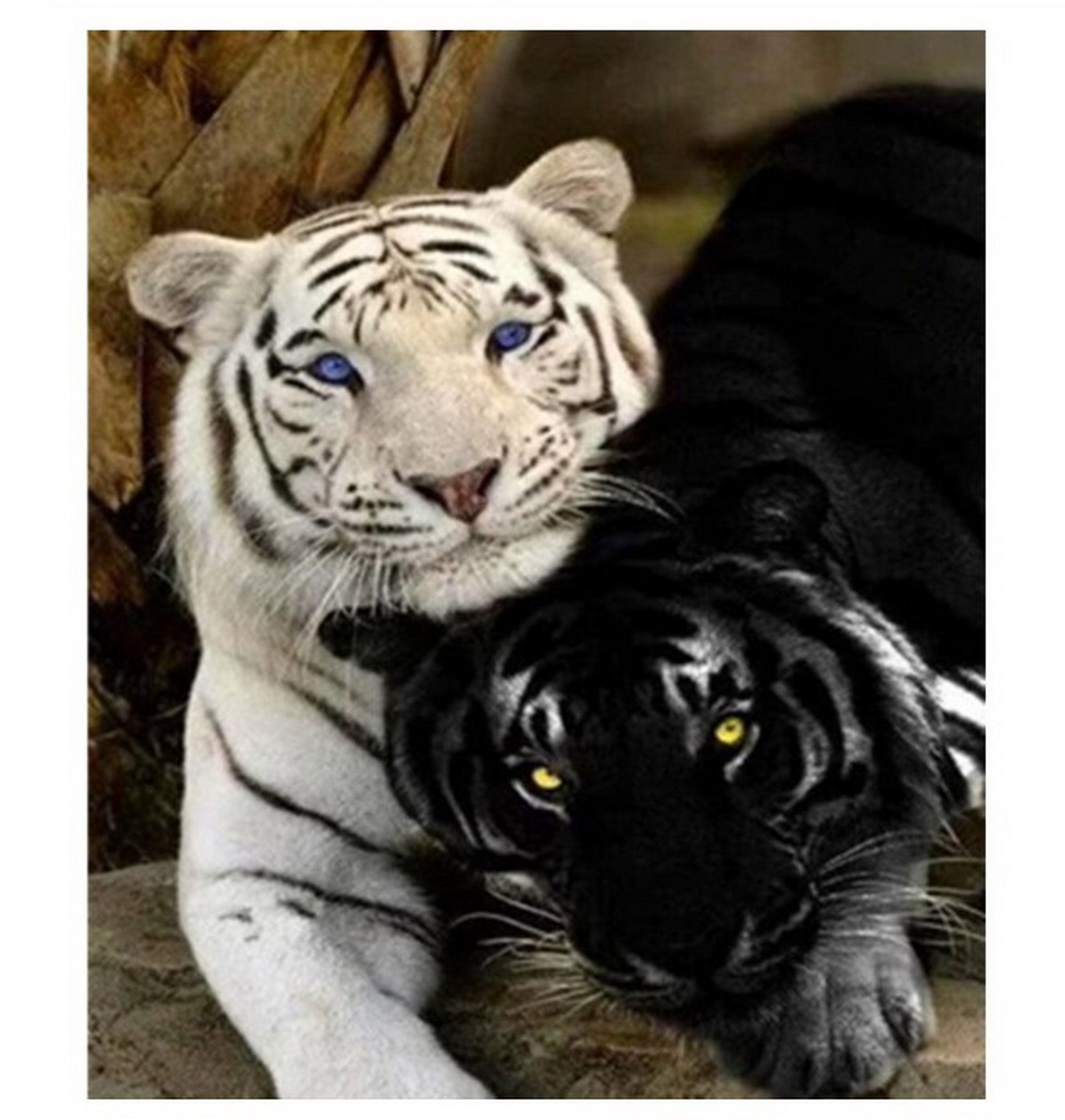 Tiger White Black Paint by Number kit, Home Decoration, Color Number kit, Modern Paint by Number, DIY Painting On Canvas, DIY Painting Kit