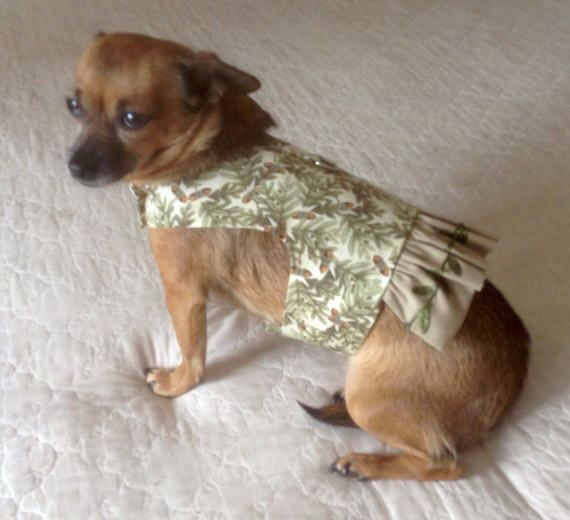 Pin By Sally Mollin On Dogs 24 7 Large Dog Clothes Dog