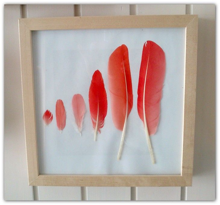 feathers of scarlet ibis found at the zoo
