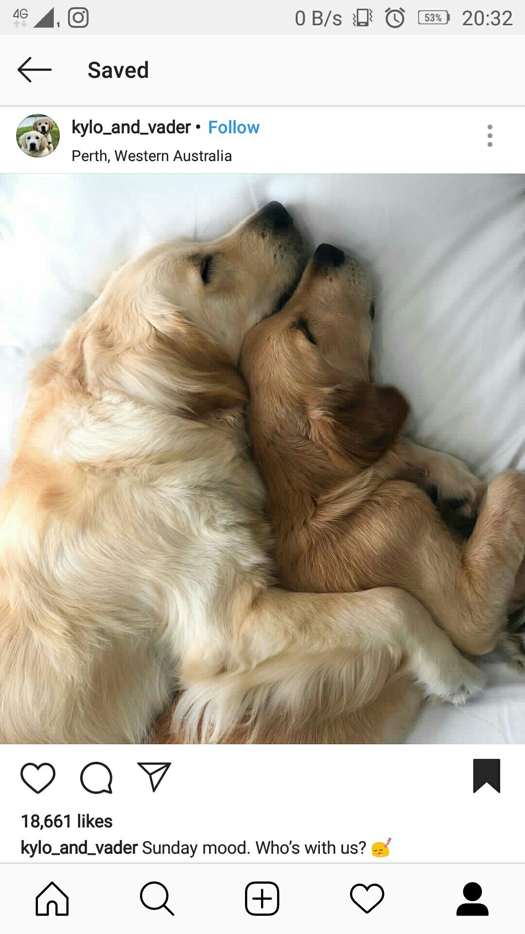 Pin By Srushti Khanzode On Ugh Cuties Dogs Golden Retriever