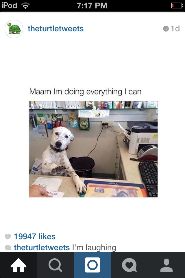 Ma'am I am trying to do everything I can!