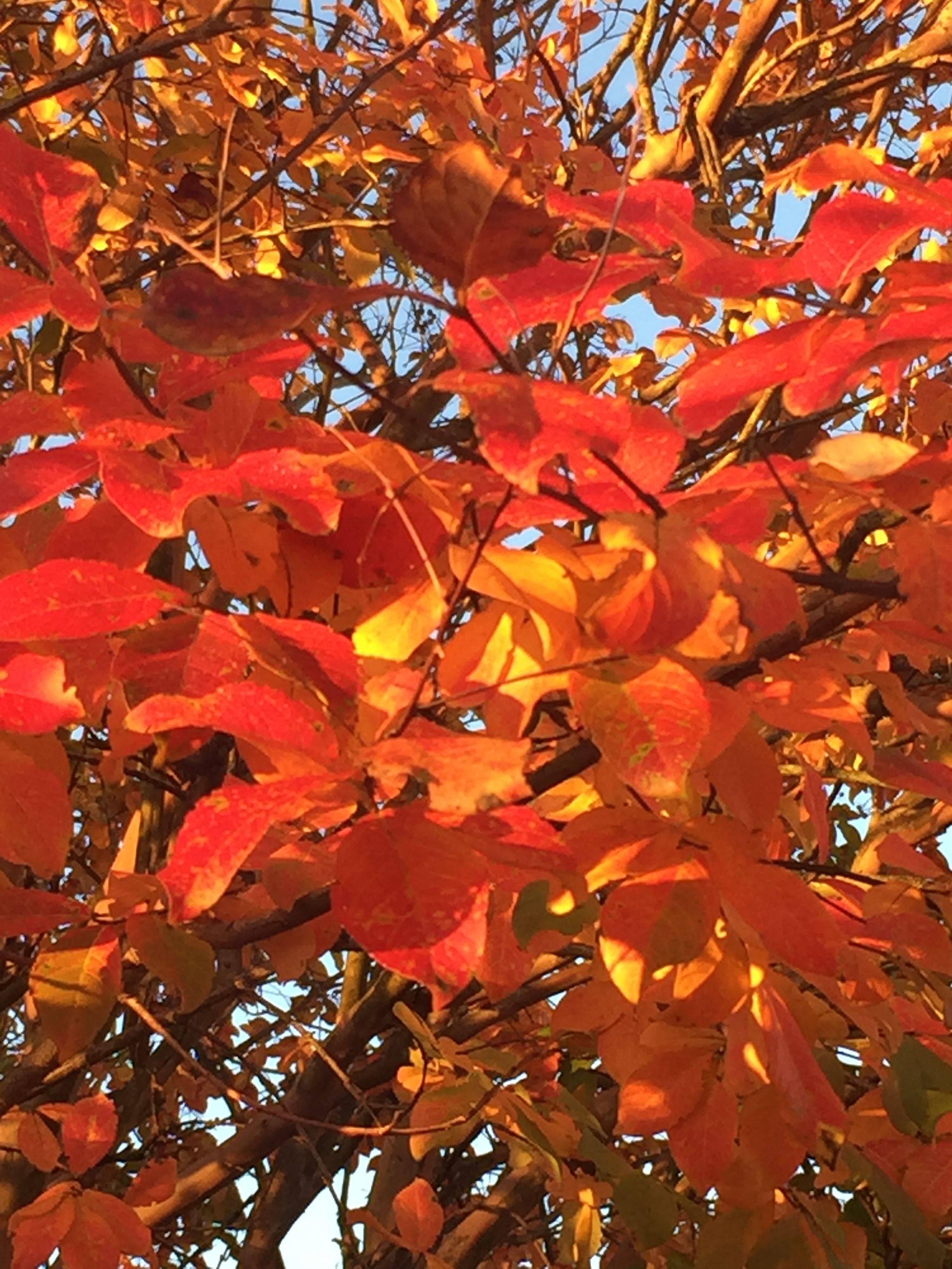 Fall Leaves, North Carolina, Autumn Leaves