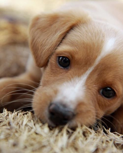 Puppy Dogs 16 Cant Resist Puppy Dog Eyes 26 Photos Cute