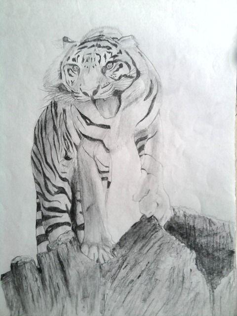 Foto Gratis Tigre Dibujar Lapiz Sombreado Imagen Gratis En