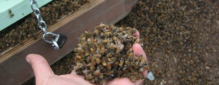 Millions Of Bees Quietly Killed In South Carolina Over Christmas #news #alternativenews