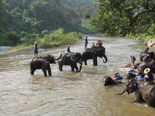 Maesa Elephant Camp, Chiang Mai  Tailandia