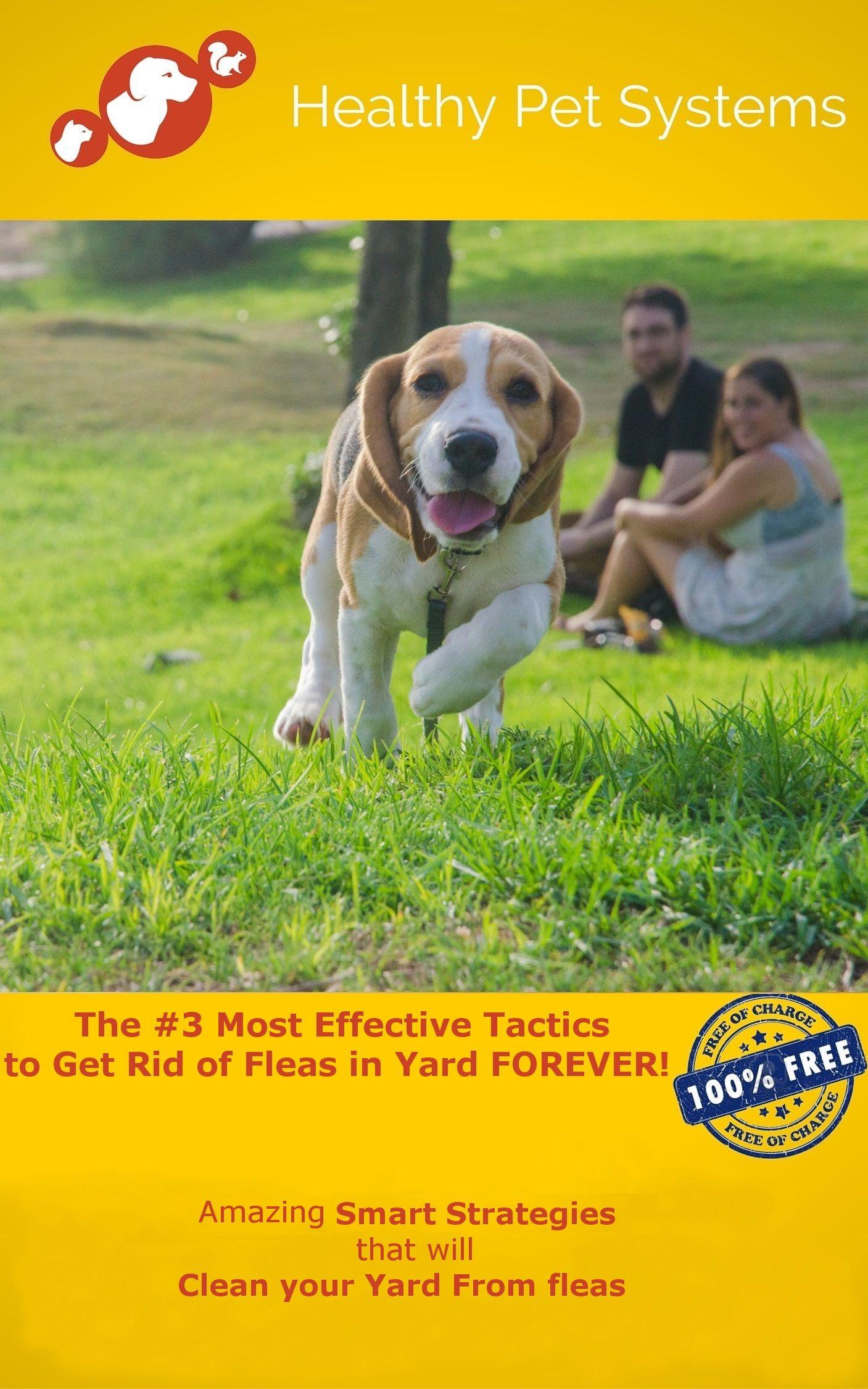 How to Get Rid of Fleas in Yard? Top 3 Methods to Get Rid ...
