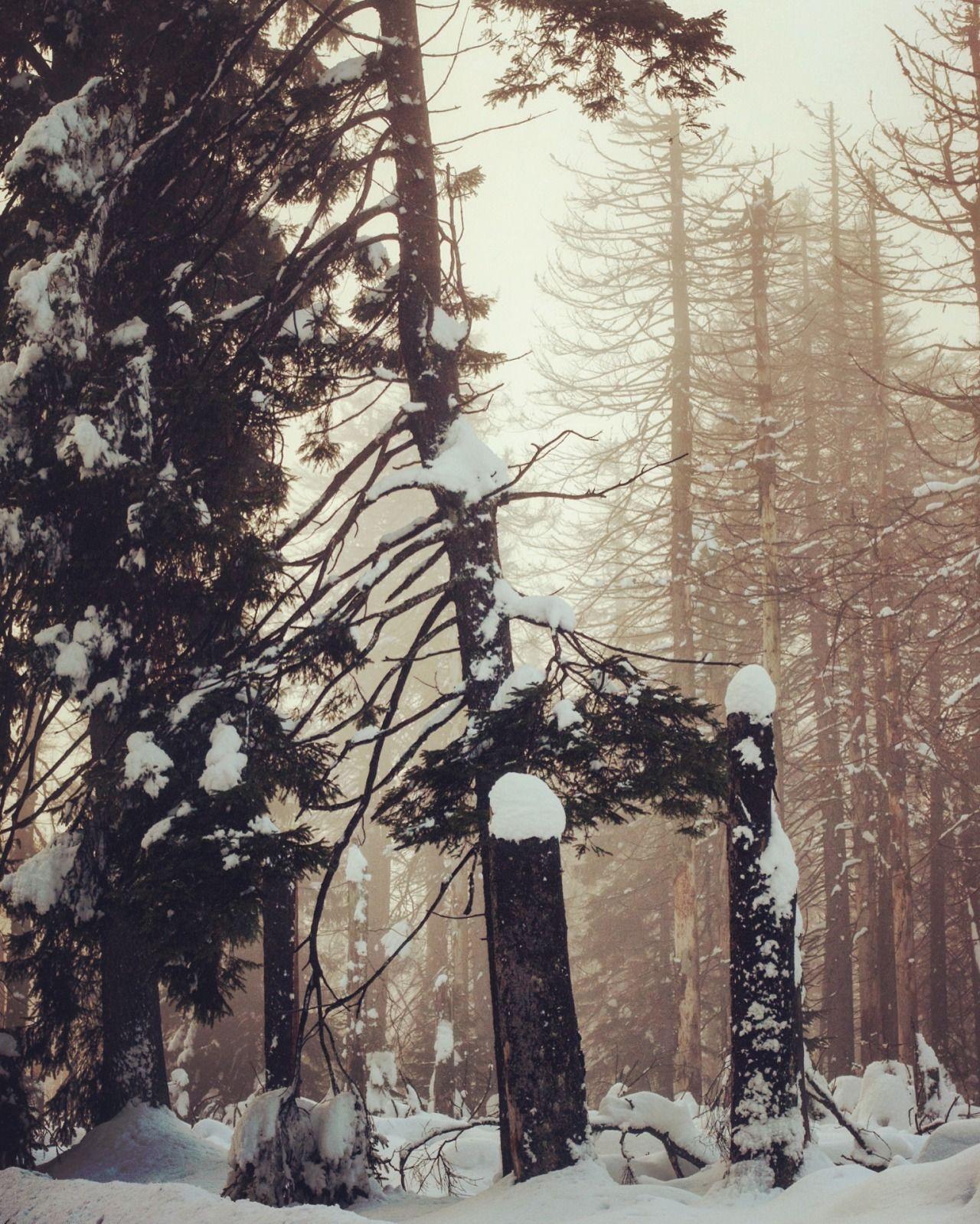 Snowy Heartsmountains by @noirerora - #artists #forest #harz #harzmountains #harzmystik #landscape #nature #noirerora #on #original #photographers #photography #snow #snowy #tumblr #winter #woods