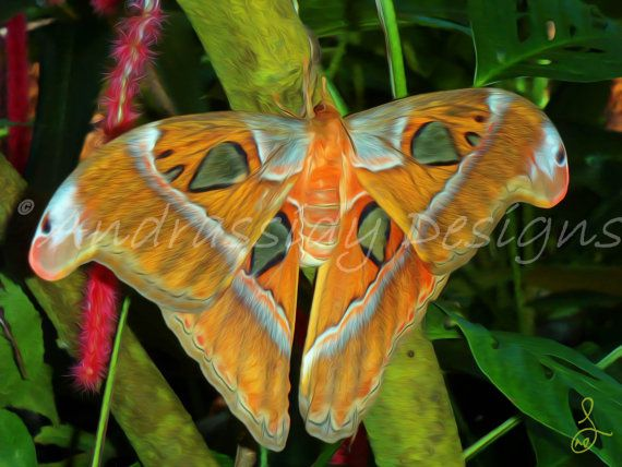 Giant Moth Digitally Enhanced Photograph by AndrassidyDesigns