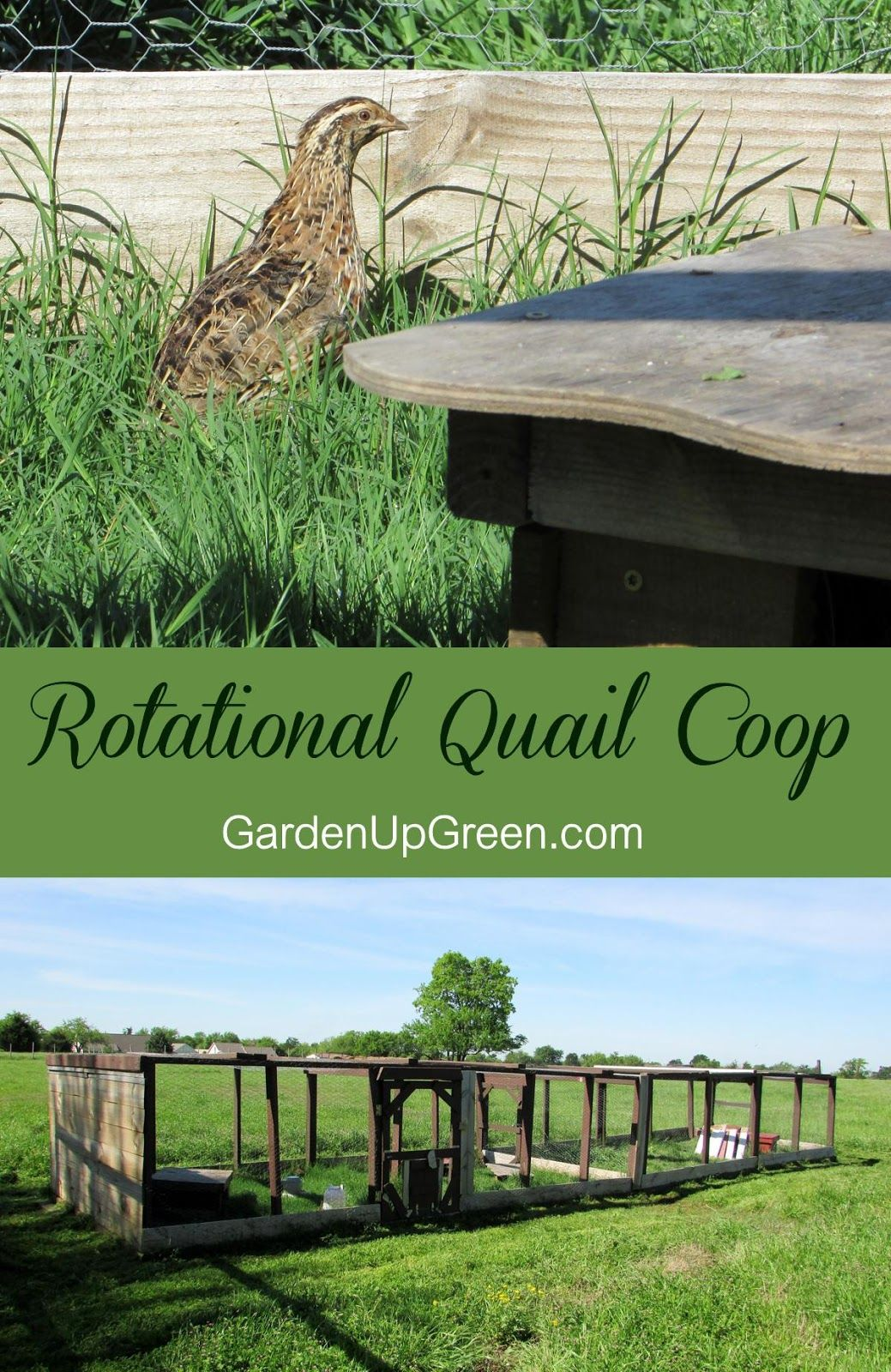 quail housing been thinking about raising some quail though none