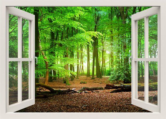 green forest wall decal, 3d window frame wall decal, trees nature