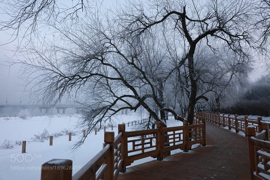 #photography Rime in the morning by jlhd001 https://t.co/rxkqSgewcj #followme #photography