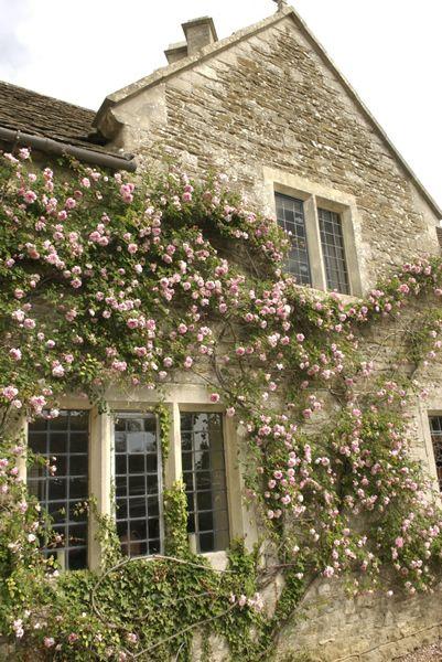 Barton Place Climbing Roses 401×600 Pixels