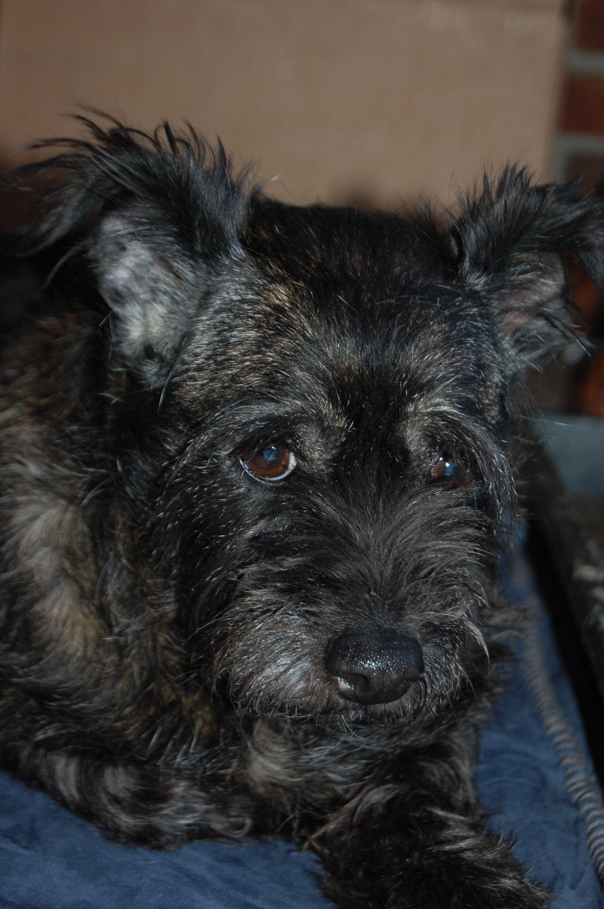 Boomer Animals, Adoption, Dogs