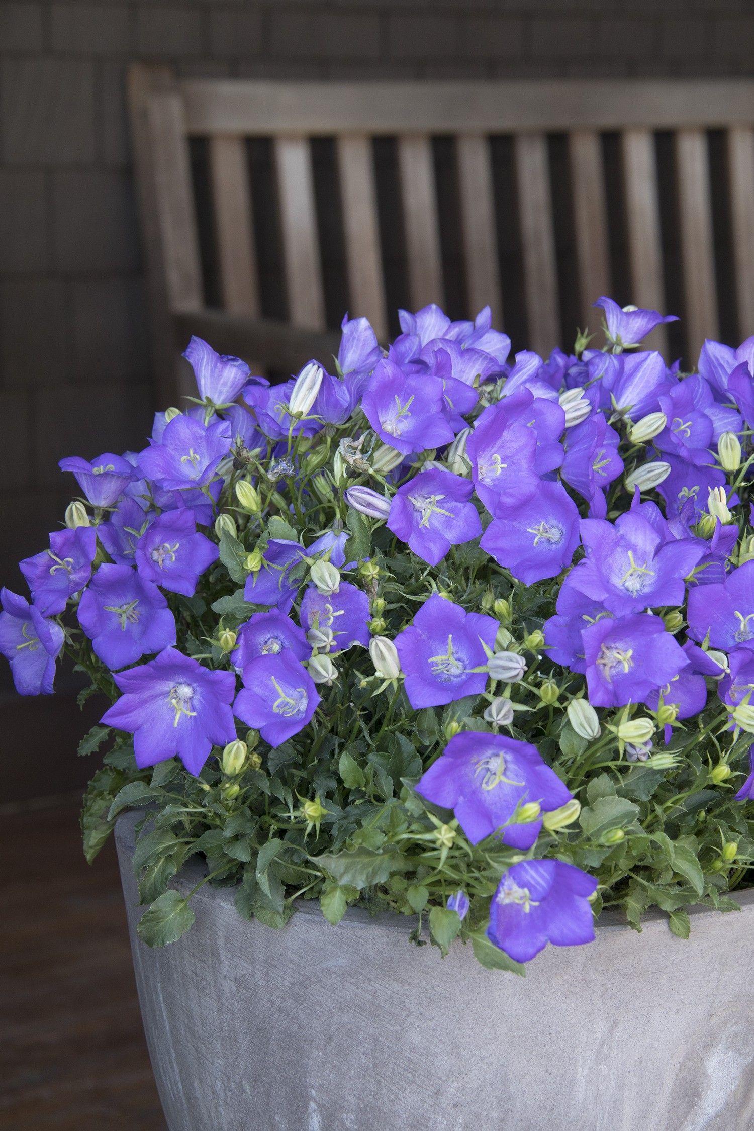 Top 10 stunning flowers that grow in shades shade flowers plants top 10 stunning flowers that grow in shades izmirmasajfo