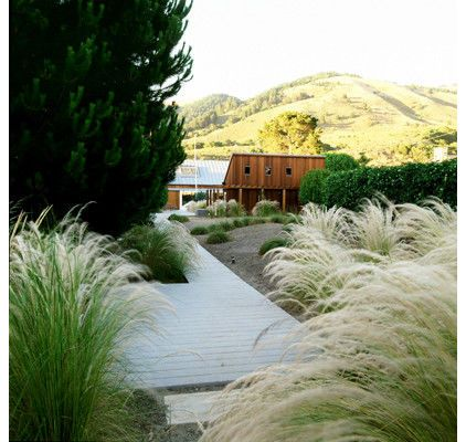 grasses lend coastal
