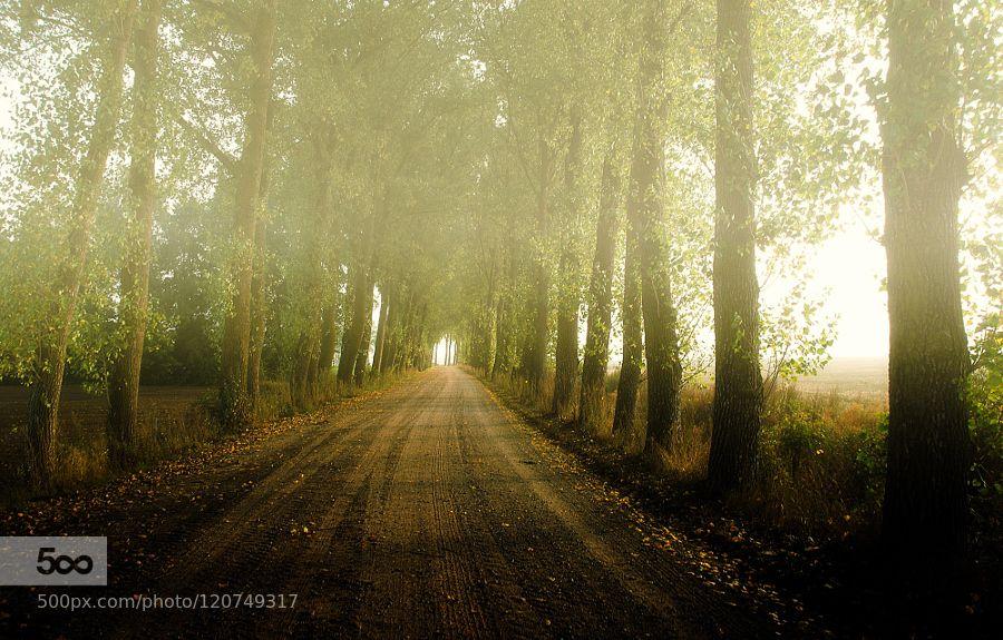 - Pinned by Mak Khalaf Nature fognaturetrees by teidseid
