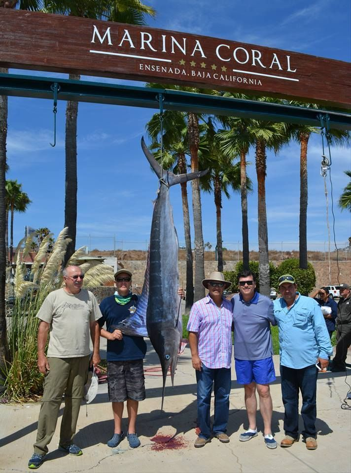 What a catch from the Papa Loco, a 172 pounds Marlin! Come to Marina Coral for an awesome fishing day This is #BajaCalifornia, live it today! #CoralExperience #Ensenada